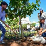 El alcalde Jaime Pumarejo durante la siembra del árbol.