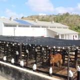 Invima habilitó planta de sacrificio regional de Lorica