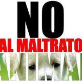 Nueva ley de protección animal en Unilibre