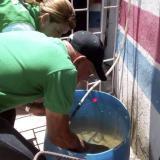Dos funcionarios limpian varios tanques para almacenar agua, los cuales pueden ser reservorios del mosquito.