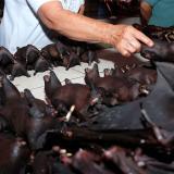 Un comerciante vende murciélagos en el mercado Tomohon Extreme Meat en la isla de Sulawesi, mientras el negocio está en auge y los turistas curiosos siguen llegando para ver precios exóticos que enfurecen a los activistas de los derechos de los animales.