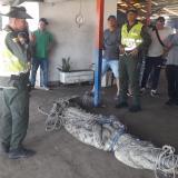 Policía retira caimán que nadaba hacia cuatro niñas en playas de Puerto Colombia