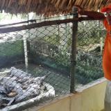 José Gabriel, el antiguo cazador que hoy protege al caimán aguja