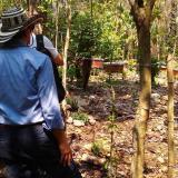 En los Montes de María le apuestan a la producción de miel para 'endulzar' la reconciliación