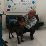 En video   Chéster, el perro atacado a machete en Montería, fue adoptado por una familia