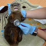 Las amenazas que enfrentan varios zoológicos colombianos por la pandemia