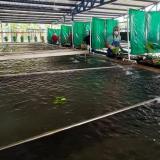 Los bananeros de la Costa no paran la producción y adecúan infraestructuras