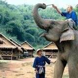 Los elefantes en Tailandia son un atractivo para el turismo.