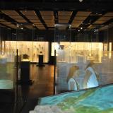 Uninorte realizará tour virtual por el Museo Mapuka
