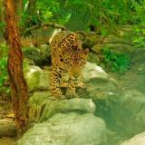 Recorrido virtual por el Zoológico de Barranquilla