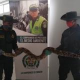 Dos policías del Grupo de Protección Ambiental y Ecológica sostienen a la boa constrictor hallada en una vivienda de Cartagena.