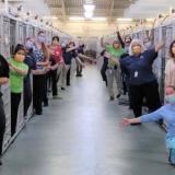 El COVID-19 vacía las jaulas de perros y gatos para adopción en Miami
