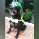 'Ñero', el perrito que sobrevivió a todo y se fue como un grande de la Policía