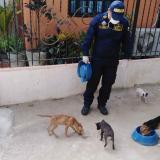Jornada de alimentación a animales callejeros.