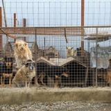 Perros y gatos sufren abandono durante cuarentena
