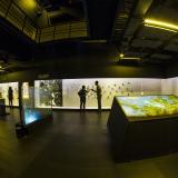 Sala del Mapuka, museo arqueológico de la Universidad del Norte.