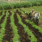 Agricultor en una faena diaria.