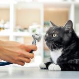 El asma felina es la afección más común en el sistema respiratorio de los gatos.