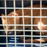 En video| Dos tigrillos, un puma y una boa regresaron a su hábitat