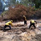 En video   En Salamanca 102 hectáreas fueron consumidas por las llamas