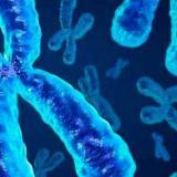 Simulación del cromosoma X.