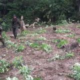 Mueren dos militares en el Cauca por explosión de artefacto