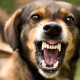 Mascotas: ¿Qué hacer cuando su perro se torna agresivo?