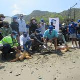 Tras ser valoradas, 57 tortugas marinas han regresado a su hábitat