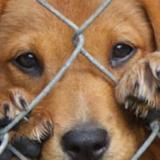 Activistas hacen llamado contra crueldad animal en el Caribe