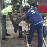 Momento en que el caballo era atendido por la Policía Ambiental y un veterinario antes de la eutanasia.