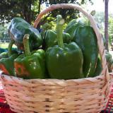 Cámara de Comercio de La Guajira apoya reactivación del sector agrícola
