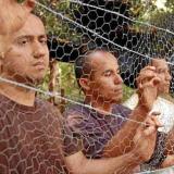 Según un informe de la Procuraduría, más de 500 secuestrados por las Farc murieron en cautiverio.