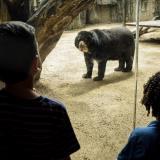 Zoológico de Barranquilla reabrirá desde el 23 de septiembre