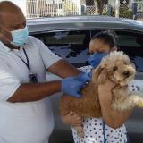 En Santa Marta, 1.653 gatos y perros han sido vacunados contra la rabia