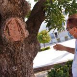 Obras de la plaza tienen enfermo al emblemático palo de mango