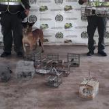 Policía rescata 34 animales silvestres y captura a dos hombres