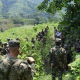Cerca de 2 mil hectáreas de hoja coca han sido erradicadas en Córdoba