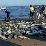 Hay júbilo en Moñitos por la pesca de 4 toneladas de jurel