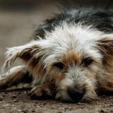 Si bien son muchas las familias que ayudan voluntariamente a las mascotas, la condición de abandono las hace más vulnerables a la agresión callejera.