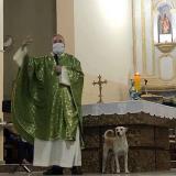 Sacerdote lleva perros callejeros a sus misas para que feligreses los adopten