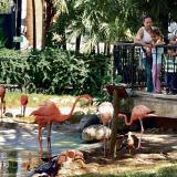 Navidad y año nuevo cerrado para el Zoológico de Barranquilla