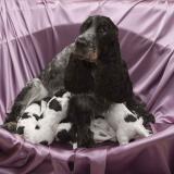 Adoptar, la opción para no incurrir en maltrato animal
