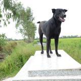 La perra que no abandona la tumba de un niño de dos años ahogado en Vietnam