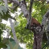 Miedo en vereda de Montería por presencia de un puma
