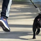 Un ciudadano paseando a su mascota.