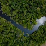 Pantanal es el mayor humedal de agua dulce del mundo.