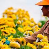 700 millones de flores exportará Colombia por el Día de San Valentín