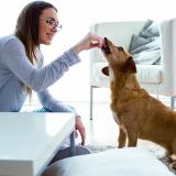 2 de cada 10 propietarios de perros prefiere celebrar San Valentín con ellos