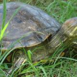 S.O.S por especies silvestres amenazadas en cuaresma