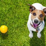 Adoptar siempre será, según los expertos, la mejor opción para darle un hogar digno a un animal doméstico.